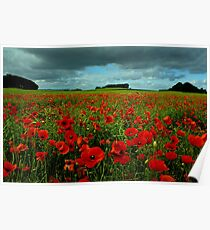 Dunfermline Poppies Poster