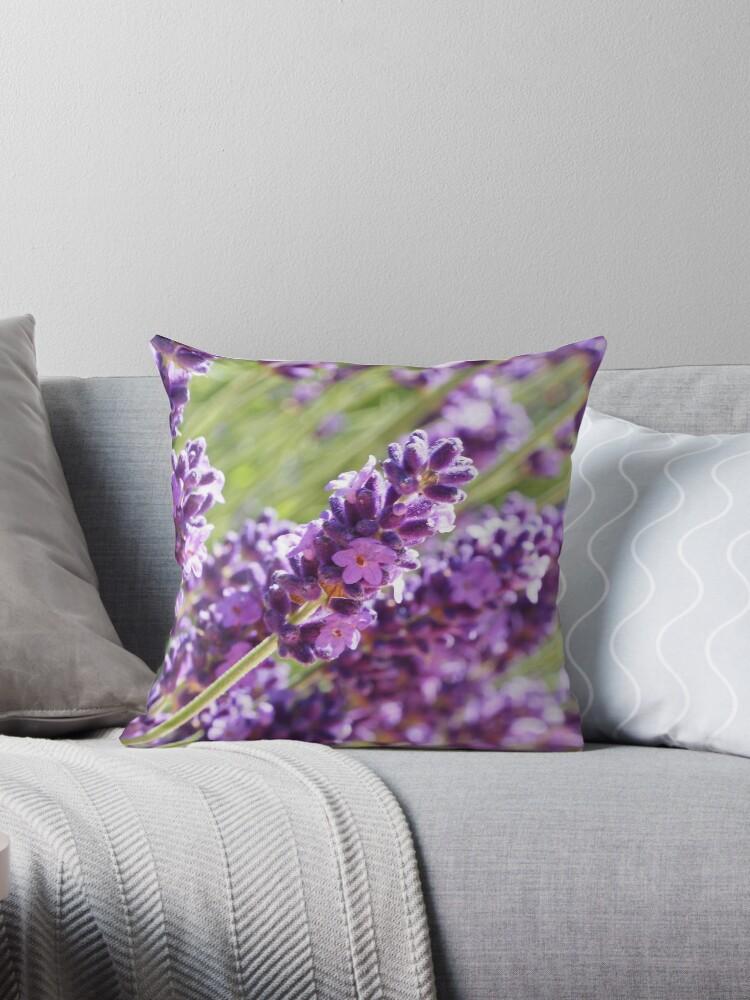 Lavenders blue by woolcos