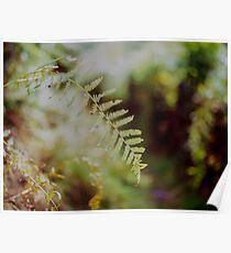 Leafy Bokeh Poster
