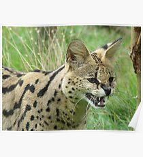 Malawi - Wildlife Heritage Foundation - Kent Poster