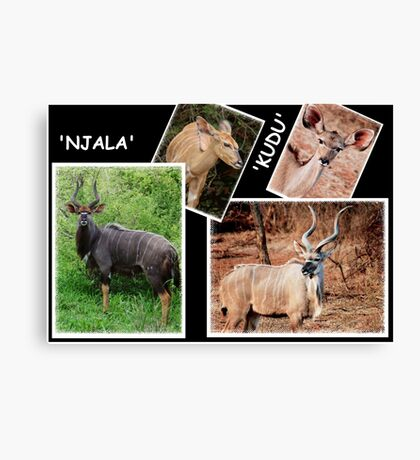 "A  COLLAGE OF THE ""NJALA"" and the ""KUDU""  Canvas Print"