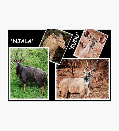 "A  COLLAGE OF THE ""NJALA"" and the ""KUDU""  Photographic Print"