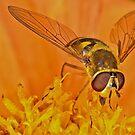 Pollnation 18 by Gareth Jones