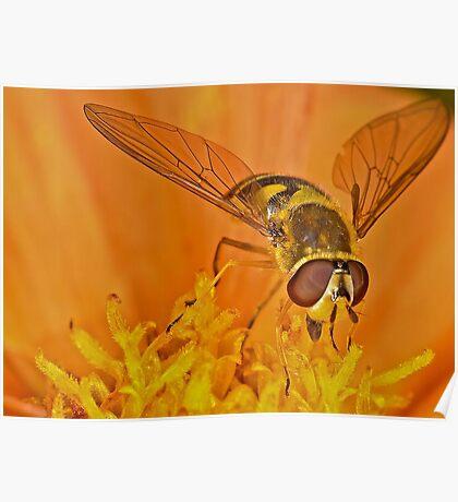 Pollnation 18 Poster