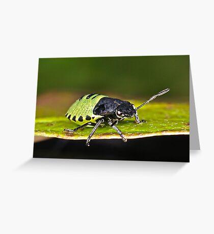 Shield Bug Greeting Card