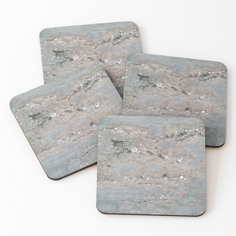 Shell Laden Cement Coasters (Set of 4)