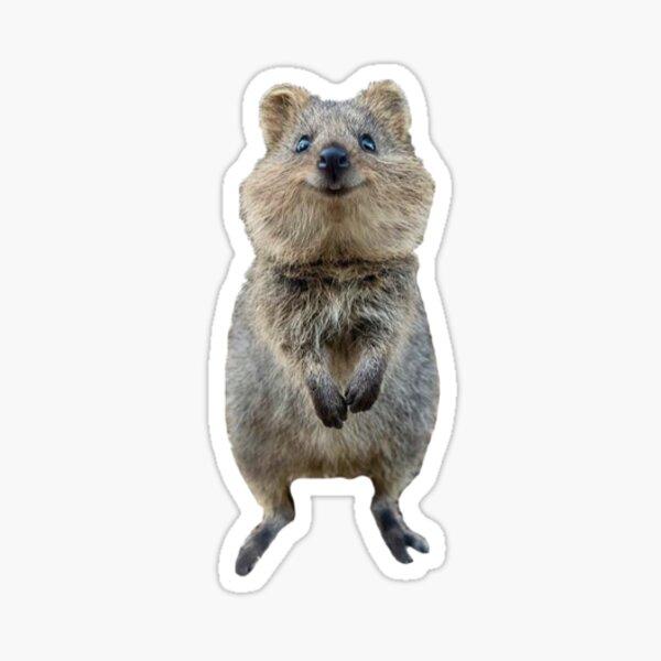 quokka heureux Sticker