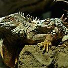 Iguanas by ser-y-star