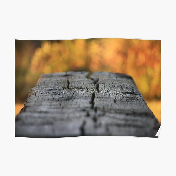 Bench in Autumn Poster