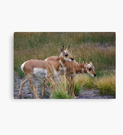 Hey...Don't Leave us Behind Canvas Print