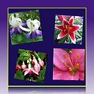 Lilies and Fuchsias - Summer Flowers Collage by BlueMoonRose