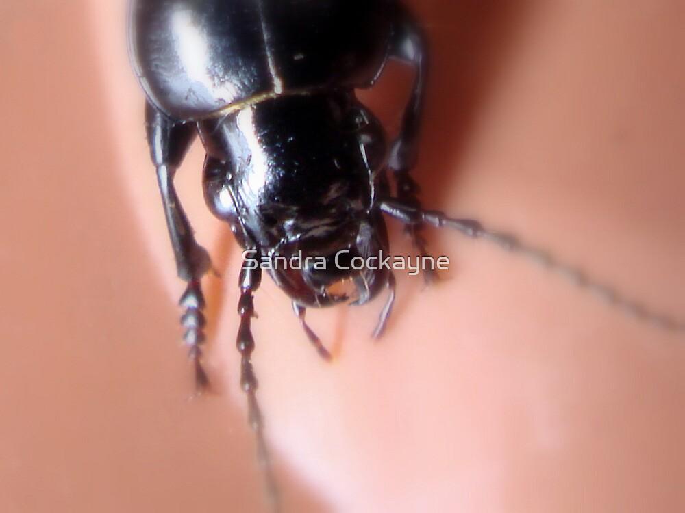 Ugly Bug by Sandra Cockayne