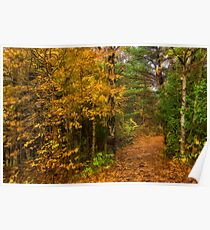 Impressions of Forests - A Walk up the Colorful Autumn Path Poster