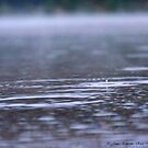 Raindrops in the Mist by rocamiadesign