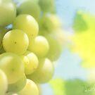 Vineyard magic by aMOONy