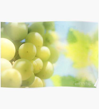 Vineyard magic Poster