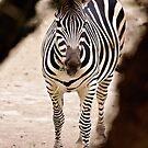 Cebra by ser-y-star