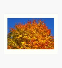 Golden Tree, Westonbirt Arboretum Art Print