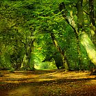 The Pathway . by Irene  Burdell