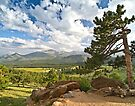 Rocky Mountain Summer by Jan Cartwright