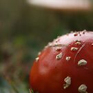 Don't eat me - pixie houses - inedible mushrooms by AbsintheFairy