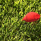 Red leaf on grass by Esther  Moliné