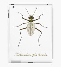 Northeastern Beach tiger beetle, Habroscelimorpha dorsalis iPad Case/Skin