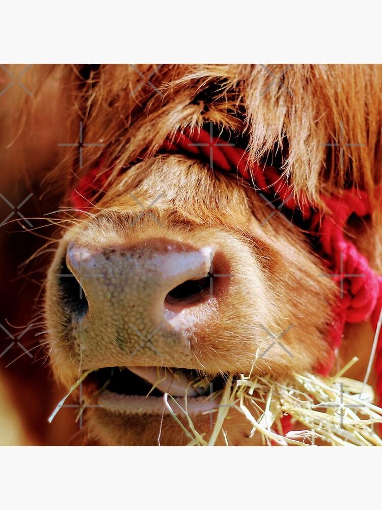 Chewing on hay by Seashorepics