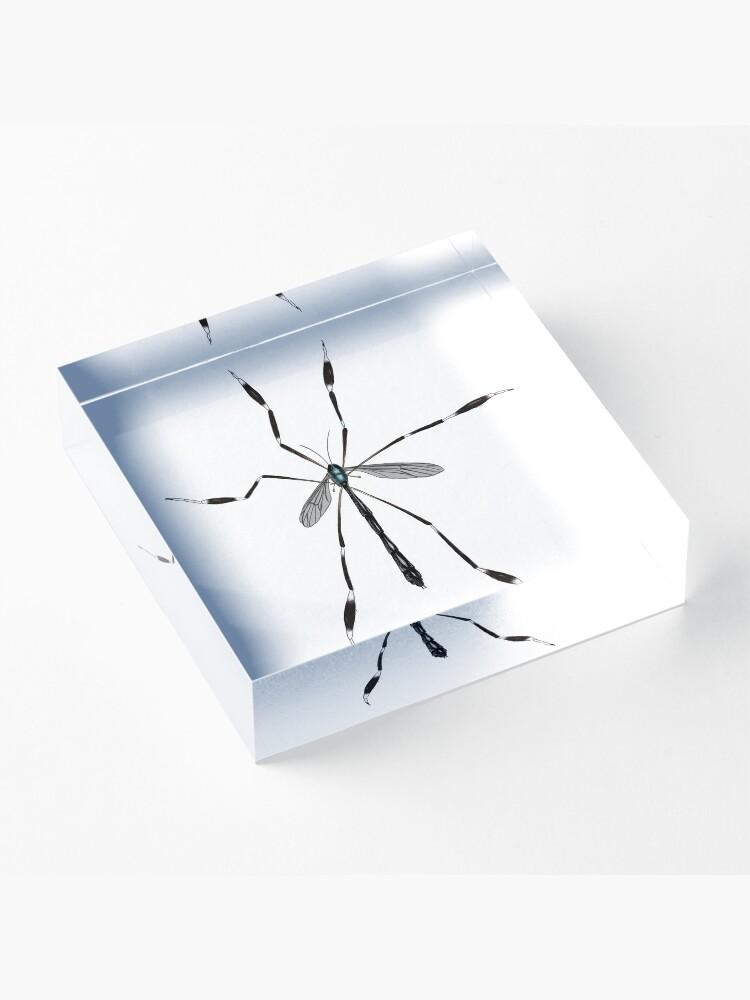 Alternate view of Phantom crane fly - Bittacomorpha clavipes Acrylic Block