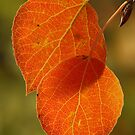 Green and Orange by Steve  Taylor