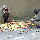 Monkeys fruit bar - Aapjes Fruit Bar by steppeland