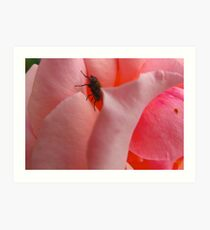 A fly in the pinkest of ointments Art Print