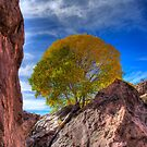 Color in San Lorenzo Canyon, New Mexico by JBoyer