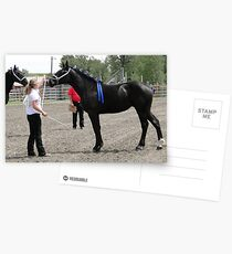 Percheron Mare Beauty II Postcards
