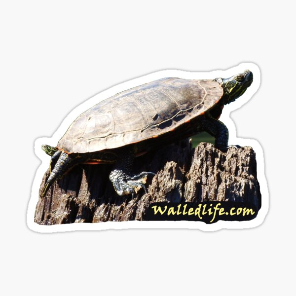 Turtlehead Sticker