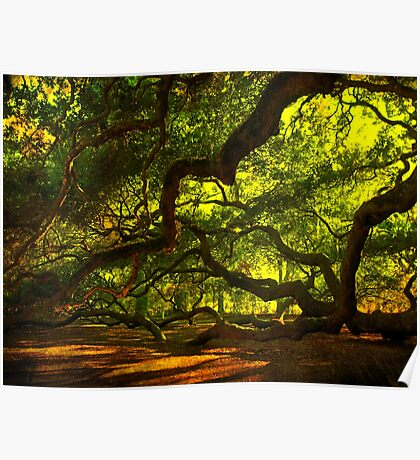 Side arms of the Angel Oak in Charleston Poster