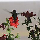 Hummingbird Splendor by Dee Belanger