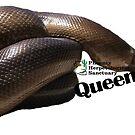Queen the Rubber Boa by PhoenixHerp