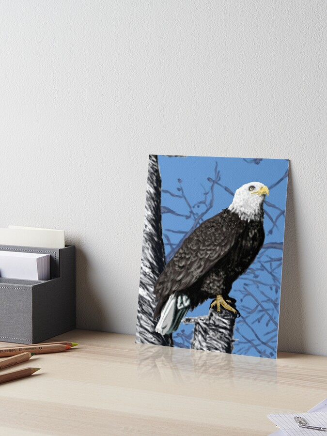 8x10 GLOSSY Photo Picture Eagle BIRD 8 x 10