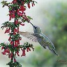 Fuchsia and Hummingbird by artbyakiko