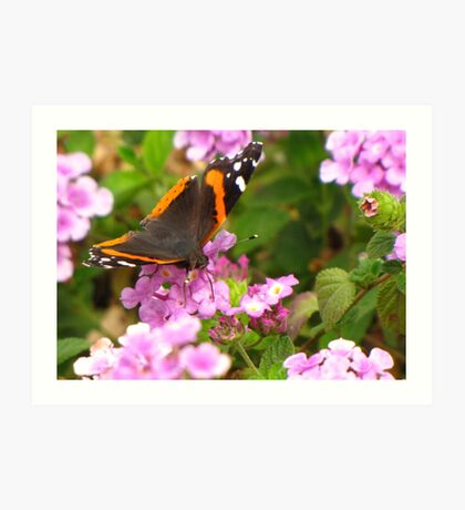Butterfly ~ Red Admiral II Art Print