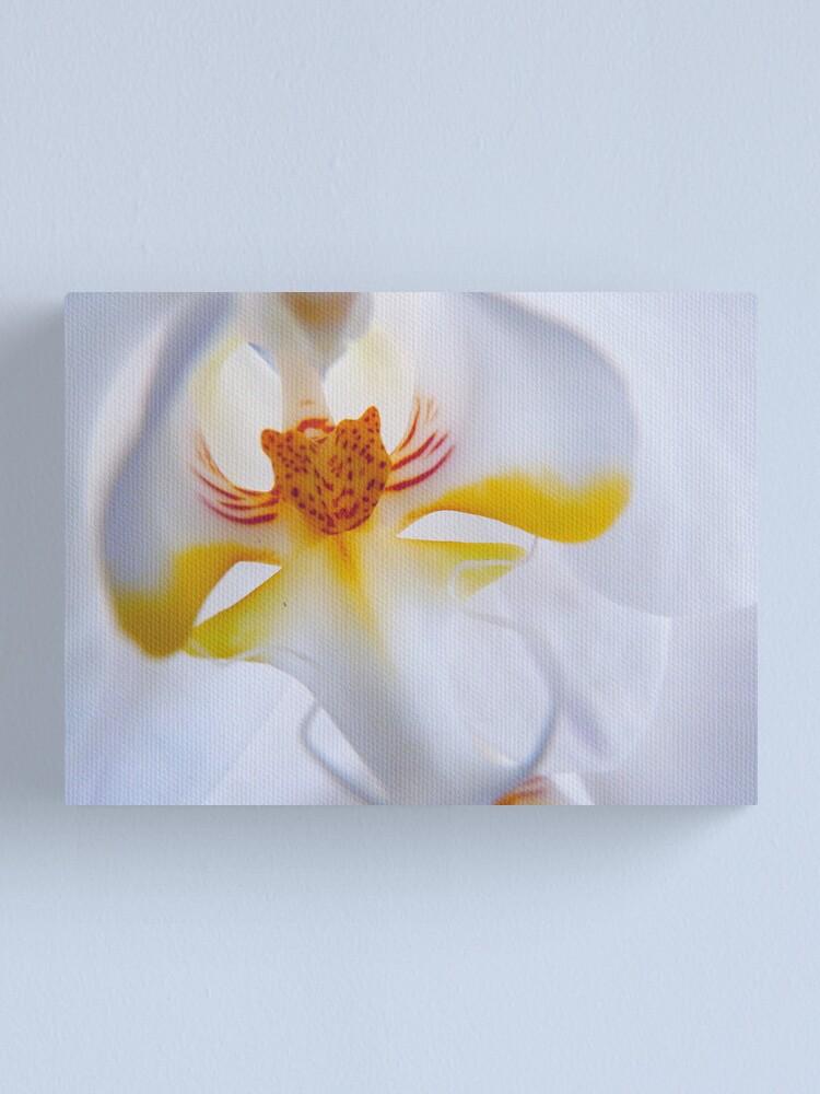 Alternate view of Phalaenopsis aphrodite  Canvas Print