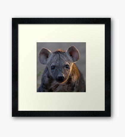 Hyena Cub Framed Print