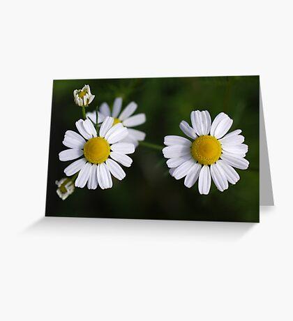 daisy days II Greeting Card