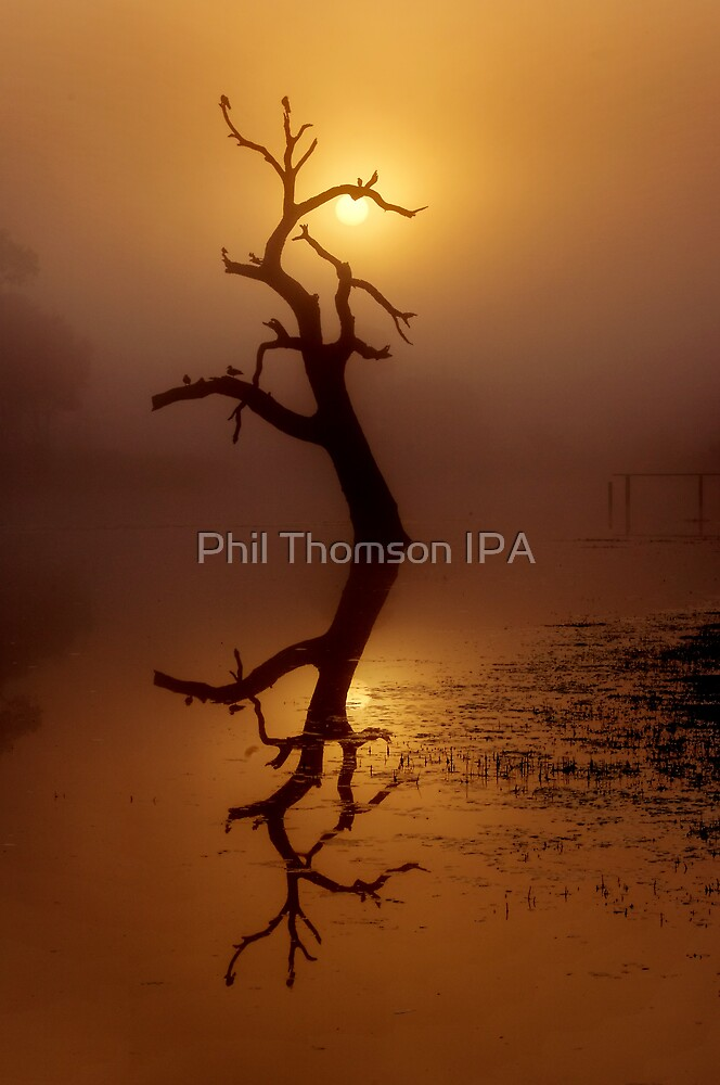 """Dawn Shroud"" by Phil Thomson IPA"