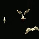 Seagulls at night by sunranger