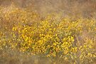 Field of Yellow Flowers by April Koehler