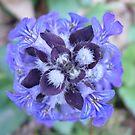 Purple Petals by PurpleDonna
