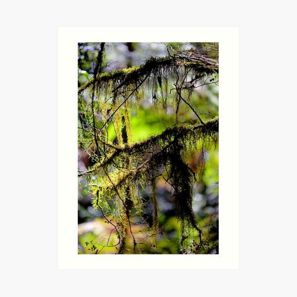 """""""Tree Fluff"""" Art Print"""