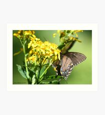 A Closer Look Swallowtail Behind Flower Art Print